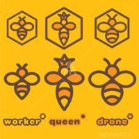 bee logo set of a worker queen and drone