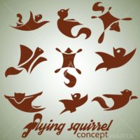 flying squirrel design concept set