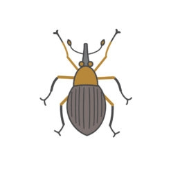 clover seed weevil logo graphic design icon vector