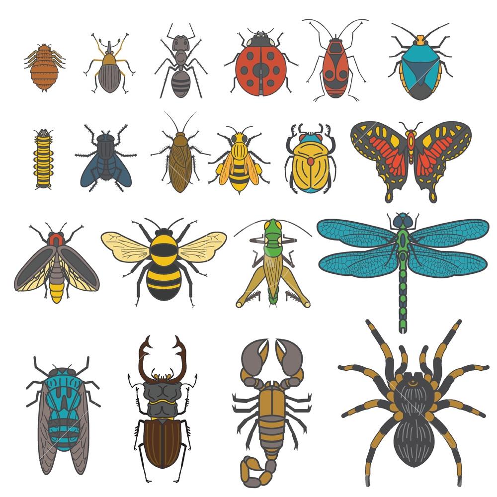 insectarium collection logo graphic design icon vector