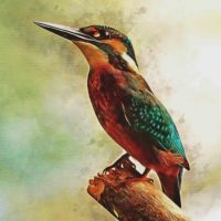 kingfisher painting preview