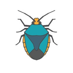 shield bug logo graphic design icon vector