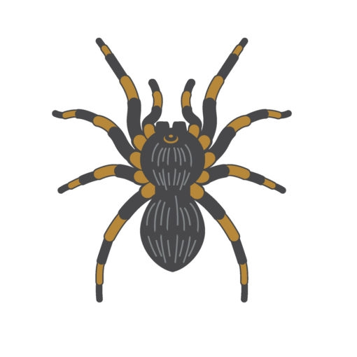 spider tarantula logo graphic design icon vector