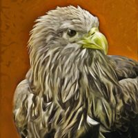 white tailed sea eagle painting preview