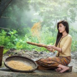 Women farmer is separating good rice free photography