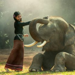 beautiful girl and the elephant free photograpy