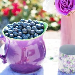 blueberries in a cup free photography