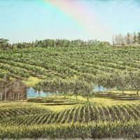 beautiful drawing ecological agriculture